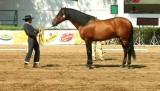 Лошади / A caballo (2012) SATRip