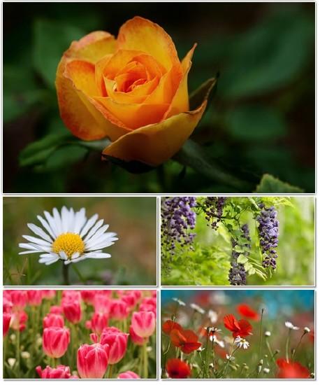 Цветы в сборнике обоев для рабочего стола 33