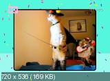 Кот-парад [01-03 из ?] (2013) SATRip