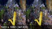 Чудеса голубой планеты. Австралия и Океания 3Д / Magic of Big Blue Australia And Oceania 3D Горизонтальная анаморфная