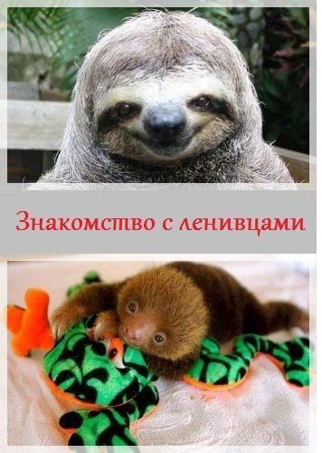 Знакомство с ленивцами  › Торрент