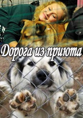 Animal Planet: ������ �� ������ / Pound Pups to Dog Stars [01-04] (2013) SATRip   VO