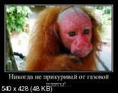 Демотиваторы '220V' 12.04.14