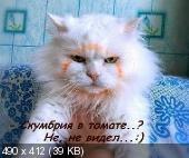 "Фотоподборка ""220V"" (23.01.15)"
