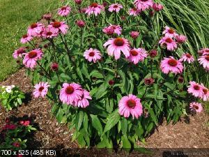 Цветы из мешковины, джута, шпагата 960ddfa374fe5869048ec39444bdc112