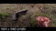 ������ / The Voices (2014) BDRemux 1080p | MVO