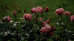 Осенняя соната (1978) BDRip от MediaClub {Android}