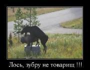 Демотиваторы '220V' 17.10.15